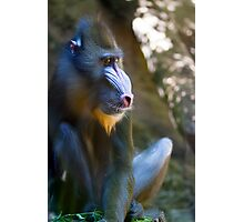 Monkey See Photographic Print