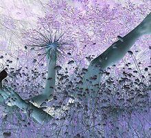 Magic by Sorcha Whitehorse ©