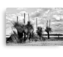 Grass Tree Monochrome Canvas Print