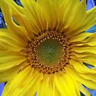 Sunflower by Lorelle Gromus