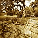 Tree shadows, Malvern by Roz McQuillan