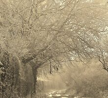 Winter Way by Lisa Blick