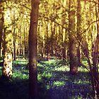 Bluebell Wood by Sybille Sterk