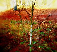 Winter Baby Birch by Lisa Taylor