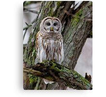 Barred in a tree Canvas Print