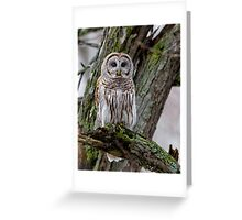 Barred in a tree Greeting Card