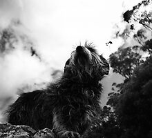 My pup bonny :) by eisblume