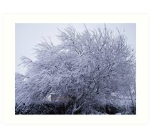 Snow covered willow Art Print