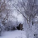 Winter garden by julieburnaby