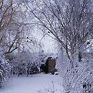 Winter garden by julieburnaby