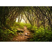 Appalachian Hiking Trail - Blue Ridge Mountains Forest Fog Nature Landscape Photographic Print