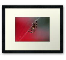 Spider in Web in UK Framed Print