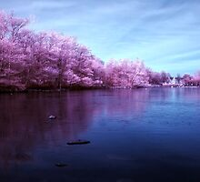 Candy Floss Lake by Don Alexander Lumsden (Echo7)