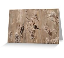 Female Reed Bunting in the reeds Greeting Card