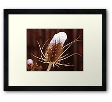 Delicate Snow on the Spikey Thistle Framed Print