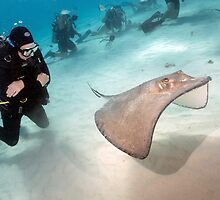 Stingray City, Grand Cayman Island by A.M. Ruttle
