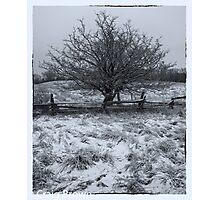 Frosty Tree Photographic Print