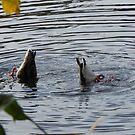 Ducks in Hiding!!! by kenspics