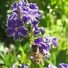 Bee Happy by Jeskyaa