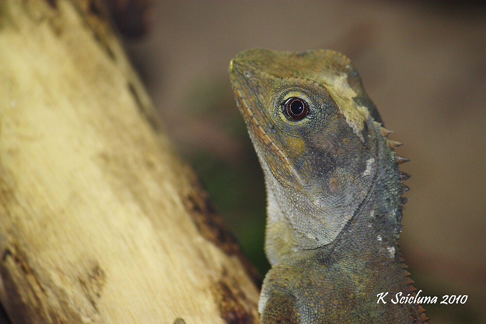lizards head by bluetaipan