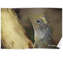 lizards head Poster