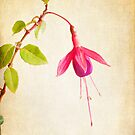 Fuschia by Colleen Farrell
