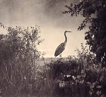The Heron by Ken Hill