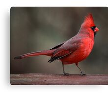 Dressed In Red Canvas Print