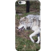 A lone timber wolf in the woods iPhone Case/Skin
