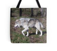 A lone timber wolf in the woods Tote Bag