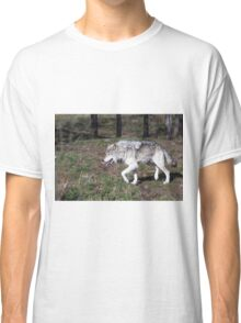 A lone timber wolf in the woods Classic T-Shirt
