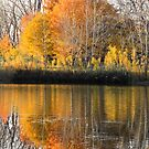 Reflections, Angrignon Park, Montreal by Tamara Travers