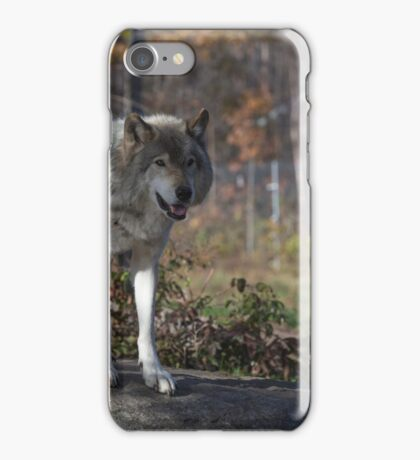 Timber wolf in the woods iPhone Case/Skin