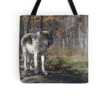 Timber wolf in the woods Tote Bag