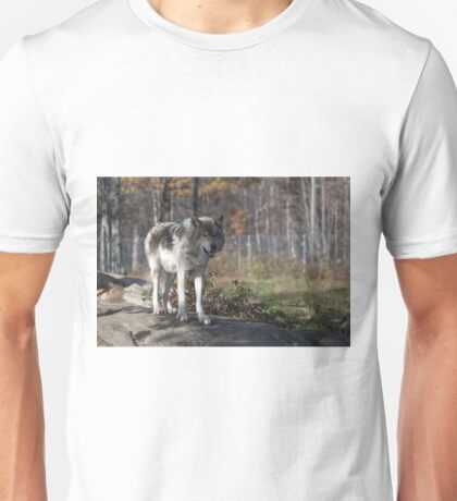 Timber wolf in the woods Unisex T-Shirt