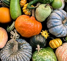 Pumpkins and gourds by Jim  Hughes