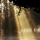 Curtain of Light by Barbara  Brown
