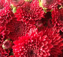 Autumn Blush by Juli Lyons