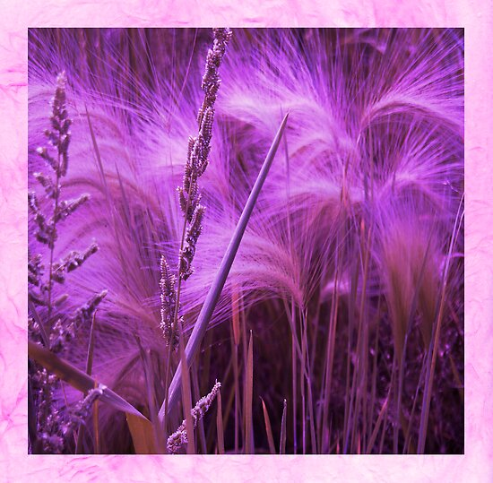 Pretty Grasses by Sandra Foster
