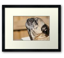 Howling at the Sun Framed Print