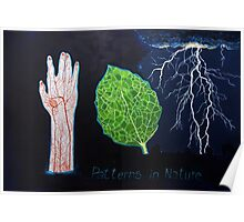 Patterns in nature Poster