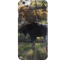 Large Moose in the woods iPhone Case/Skin