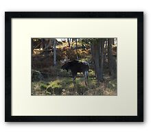 Large Moose in the woods Framed Print