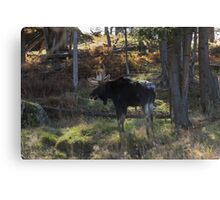Large Moose in the woods Canvas Print