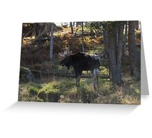 Large Moose in the woods Greeting Card