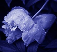 After a heavy rainfall... by Laurie Minor