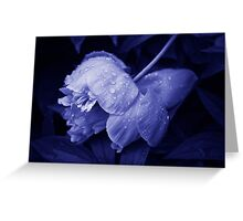 After a heavy rainfall... Greeting Card