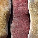 pods tricolor by yvesrossetti