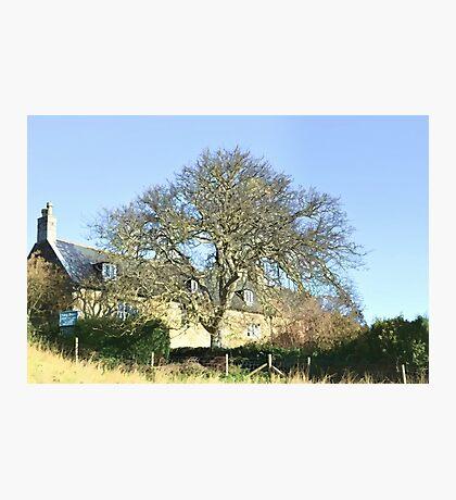 Abbey House Tearooms At Abbotsbury Dorset Photographic Print