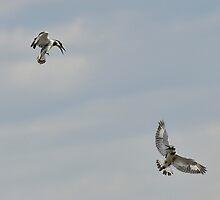 Aerial Skirmish by Macky